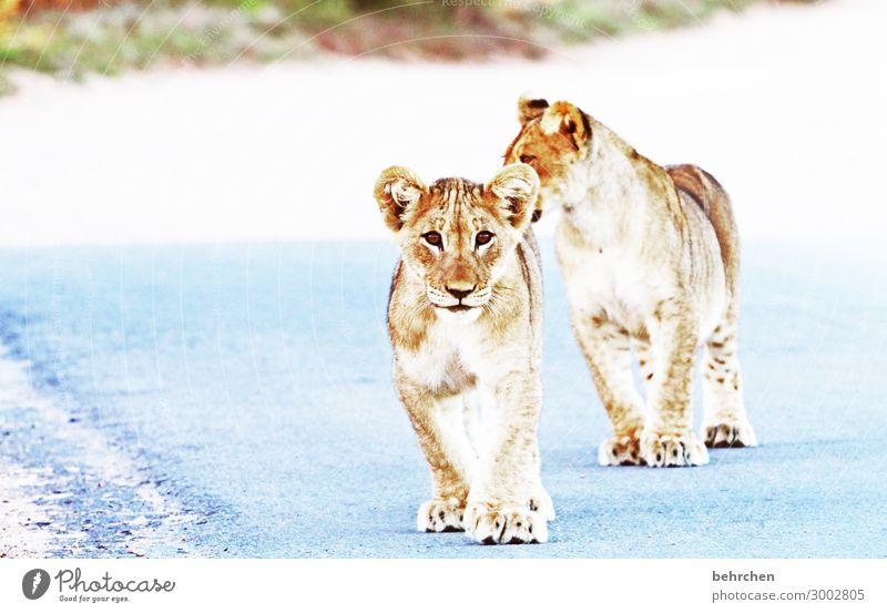 on the road again | der weg ist versperrt Ferien & Urlaub & Reisen Ferne Tierjunges Tourismus außergewöhnlich Freiheit Ausflug Wildtier Abenteuer fantastisch