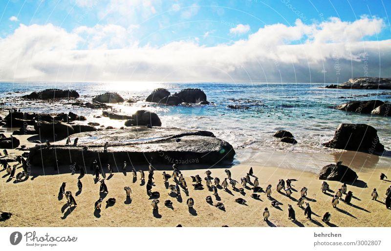 meetingpoint Himmel Ferien & Urlaub & Reisen Natur Landschaft Sonne Meer Wolken Ferne Strand Tourismus außergewöhnlich Freiheit Felsen Ausflug Wellen Wildtier