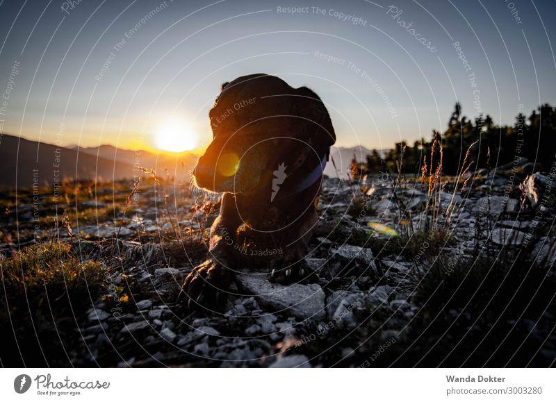 Sunset Dog Natur Hund Sommer schön Landschaft Erholung Tier Berge u. Gebirge Glück Freiheit Horizont wandern Idylle Abenteuer genießen Schönes Wetter