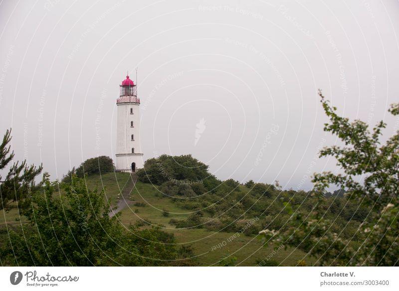 Isolation   im Elfenbeinturm Insel Natur Landschaft Sommer Hügel Küste Ostsee Hiddensee Turm Leuchtturm Sehenswürdigkeit Leuchtfeuer Dornbusch/Hiddensee