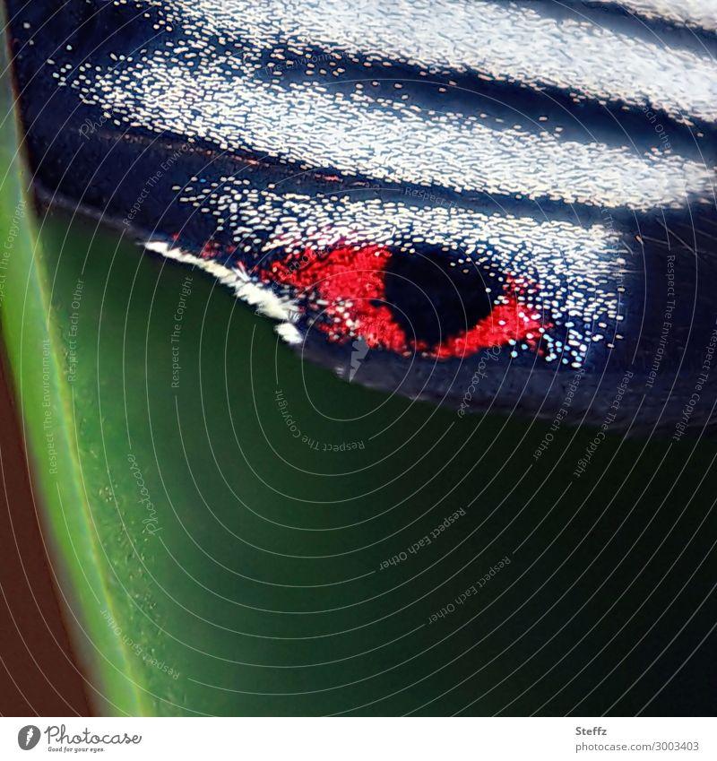 das Auge Natur Schmetterling Flügel Edelfalter scharlachroter Schwalbenschwanz Ritterfalter beobachten Blick bedrohlich nah natürlich grün schwarz weiß bizarr