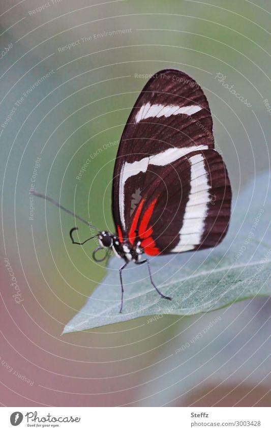 Edelfalter Natur Blatt Schmetterling Flügel Gelbstreifiger Passionsfalter Rüssel Beine elegant exotisch schön natürlich grün rot schwarz weiß achtsam ruhig