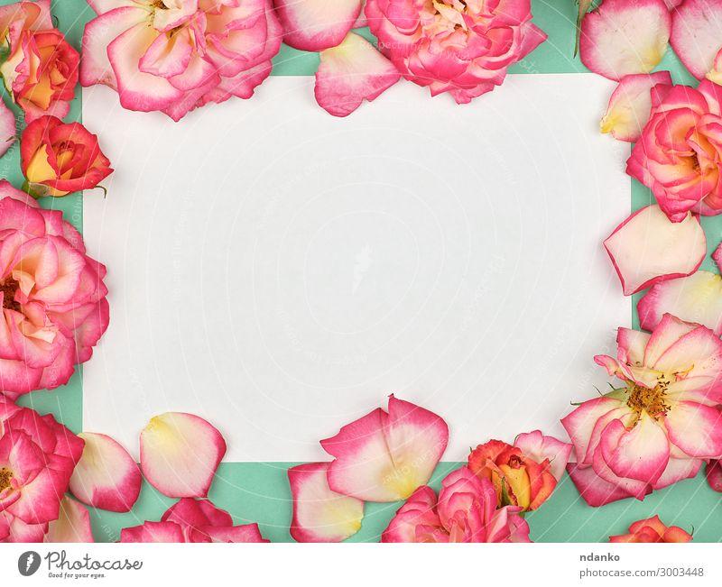 reines weißes Papierblatt und Knospen von rosa Rosen Design Dekoration & Verzierung Feste & Feiern Valentinstag Muttertag Hochzeit Geburtstag Business Natur