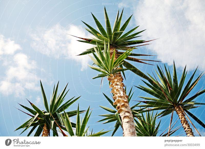 Palmen Ferien & Urlaub & Reisen Tourismus Sommer Sommerurlaub Natur Himmel Wolken Pflanze Baum Strand Insel Holz blau grün Farbfoto Außenaufnahme Menschenleer