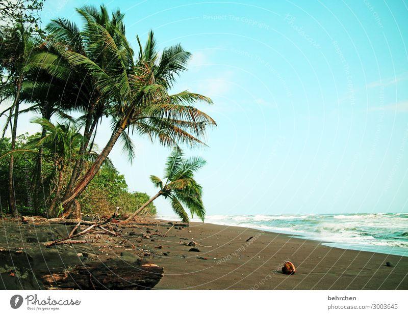lieblingsstrand Ferien & Urlaub & Reisen Tourismus Ausflug Abenteuer Ferne Freiheit Natur Landschaft Himmel Baum exotisch Palme Kokosnuss Wellen Küste Strand
