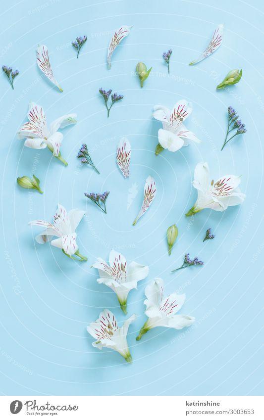Blumen auf hellblauem Hintergrund Design Dekoration & Verzierung Hochzeit Frau Erwachsene Mutter oben weiß Kreativität romantisch hell-blau flache Verlegung