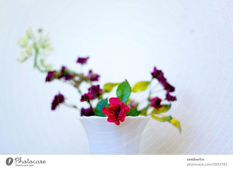 Blümchen again Blume Blühend Blüte Garten Schrebergarten Kleingartenkolonie Menschenleer Natur Pflanze Sommer Textfreiraum Tiefenschärfe Vase Blumenstrauß