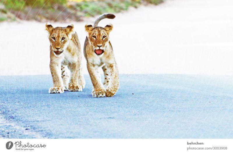 halbstarke Ferien & Urlaub & Reisen Natur Tier Ferne Tierjunges Tourismus außergewöhnlich Freiheit Ausflug Wildtier Kraft Abenteuer fantastisch gefährlich
