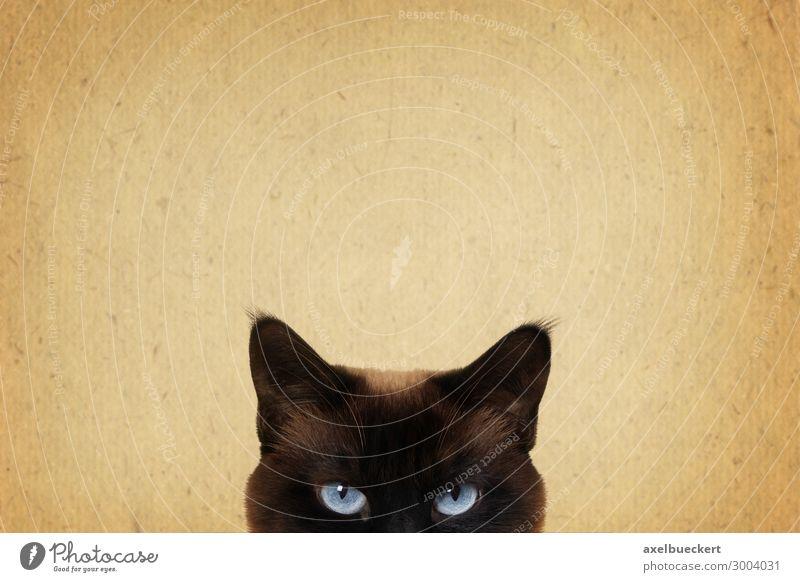 Katze beobachtet Tier Haustier 1 bedrohlich retro braun Katzenauge Bildausschnitt Hintergrundbild Blick Neugier beobachten Überwachung lustig