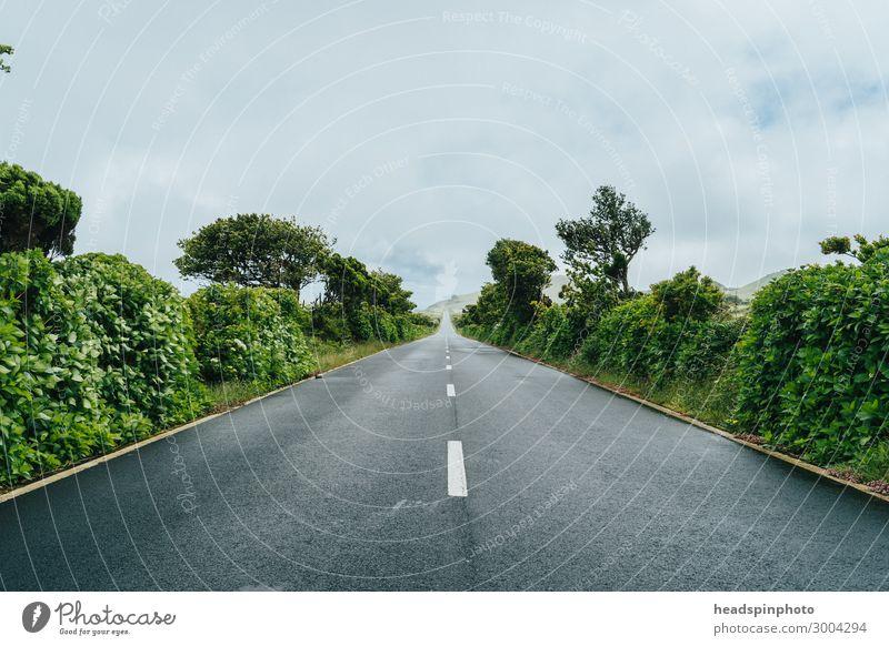 Gerade Straße durch grüne Natur und Wolken, Azoren, Portugal Ferien & Urlaub & Reisen Tourismus Ausflug Umwelt Landschaft Pflanze Himmel Gewitterwolken Sommer