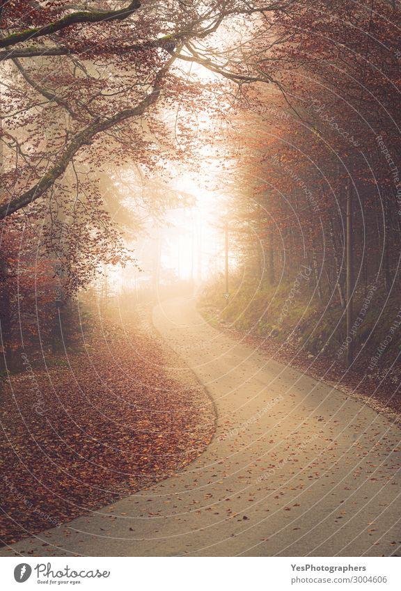 Geschwungene Gasse in nebligem Herbstwald schön Natur Landschaft Nebel Baum Blatt Park Wald Straße Wege & Pfade rot Perspektive Oktober vor Asphalt herbstlich