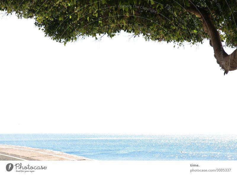 Stille Weite Umwelt Natur Landschaft Wasser Horizont Schönes Wetter Baum Wellen Küste Strand Wege & Pfade Uferpromenade maritim Gefühle Lebensfreude Schutz