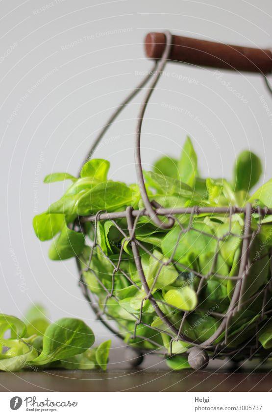 kleiner Drahtkorb mit frisch gepflücktem Feldsalat auf einem Tisch Lebensmittel Salat Salatbeilage Ernährung Bioprodukte Vegetarische Ernährung außergewöhnlich