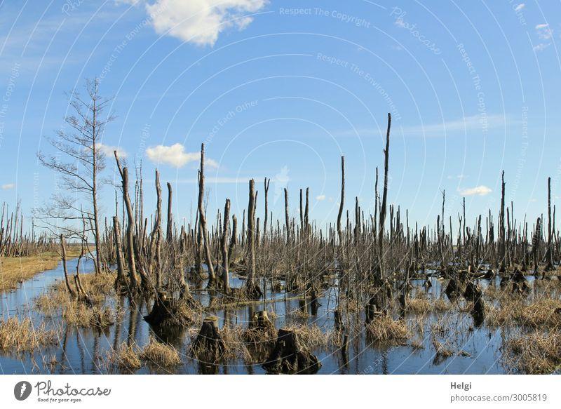 bizarre abgestorbene Bäume in einem Moorsee bei schönem Wetter Umwelt Natur Landschaft Pflanze Wasser Himmel Wolken Frühling Schönes Wetter Baum Gras