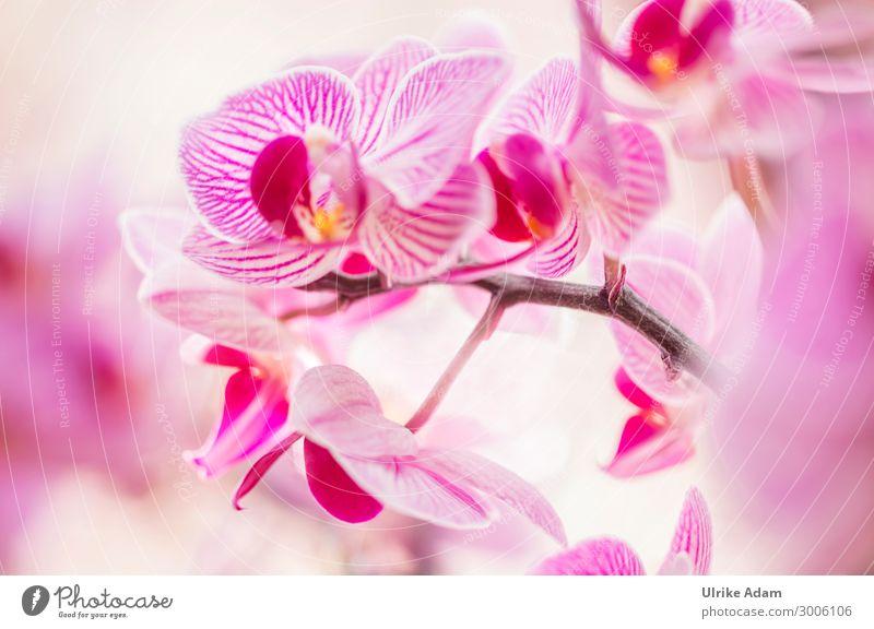 Orchideen Zauber Wellness harmonisch Erholung ruhig Meditation Spa Feste & Feiern Natur Pflanze Frühling Sommer Herbst Winter Blume Blüte Orchideenblüte Blühend