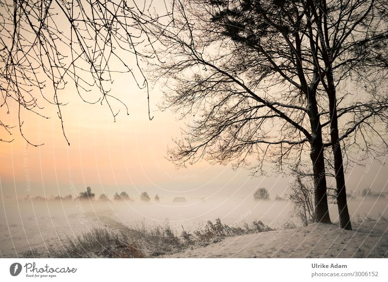 Winter im Teufelsmoor Wellness Tapete Trauerkarte Natur Landschaft Sonnenaufgang Sonnenuntergang Schönes Wetter Nebel Eis Frost Schnee Wald Moor Sumpf leuchten