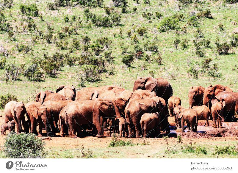 badetag Tierliebe Wildnis Fernweh Respekt stark Kraft gewaltig Ausflug Tourismus Ferien & Urlaub & Reisen Freiheit Ferne addo elefantenpark Abenteuer Safari