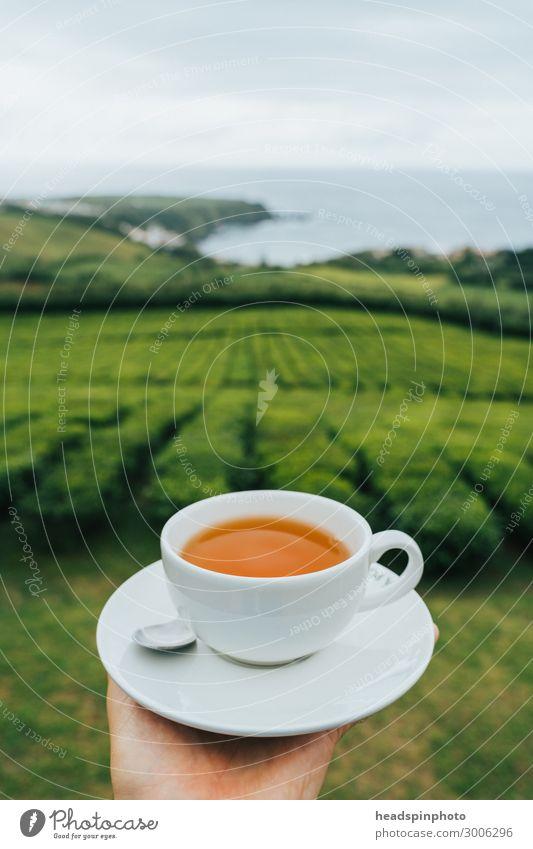 Tasse schwarzer Tee vor Teeplantage und Meer, São Miguel, Azoren Getränk Heißgetränk Landschaft Pflanze Nutzpflanze Teepflanze Plantage Küste Portugal Gefühle