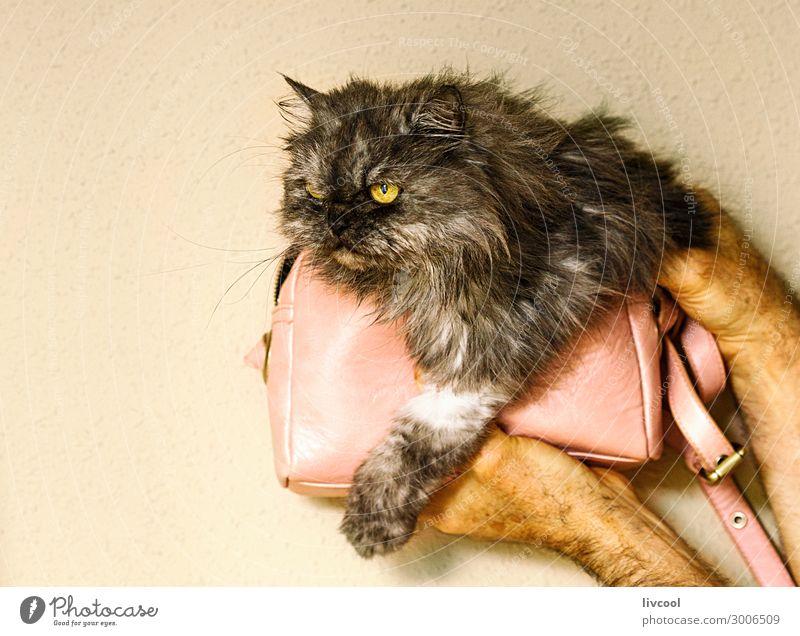 Katze Frau Mensch Mann Haus Tier Lifestyle Erwachsene Liebe Familie & Verwandtschaft grau rosa Freundschaft niedlich Coolness heimwärts