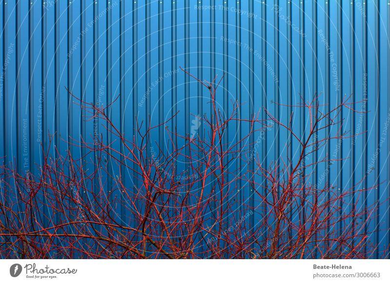 Blau-Rot Arbeitsplatz Industrie Umwelt Natur Sträucher Garten Bauwerk Gebäude Architektur Fassade Wellblechwand Wellblechhütte Arbeit & Erwerbstätigkeit
