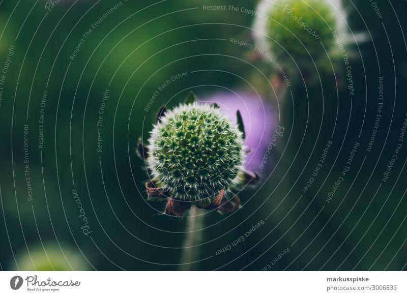 Blüte Macro Close Up Natur Pflanze grün Tier Blatt dunkel Garten Freizeit & Hobby Park Wachstum authentisch Blühend violett exotisch stachelig