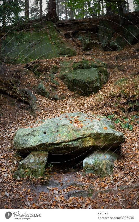 Hünengrab im Wald Natur Landschaft Herbst Bauwerk Stein alt Steinblock Außenaufnahme Textfreiraum oben Textfreiraum unten