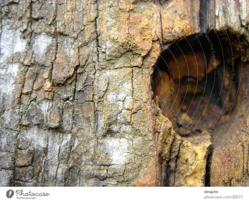 Aging Wood Holz Landschaft
