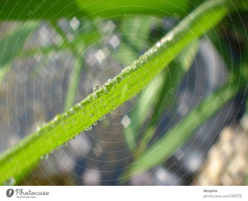 Drops Natur Wasser Wassertropfen