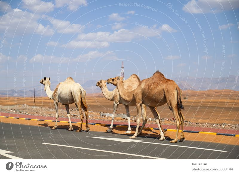 auf ins wochenende. Ferien & Urlaub & Reisen Tourismus Ausflug Abenteuer Ferne Sommer Umwelt Natur Sand Himmel Schönes Wetter Wüste Oman Verkehr Straße