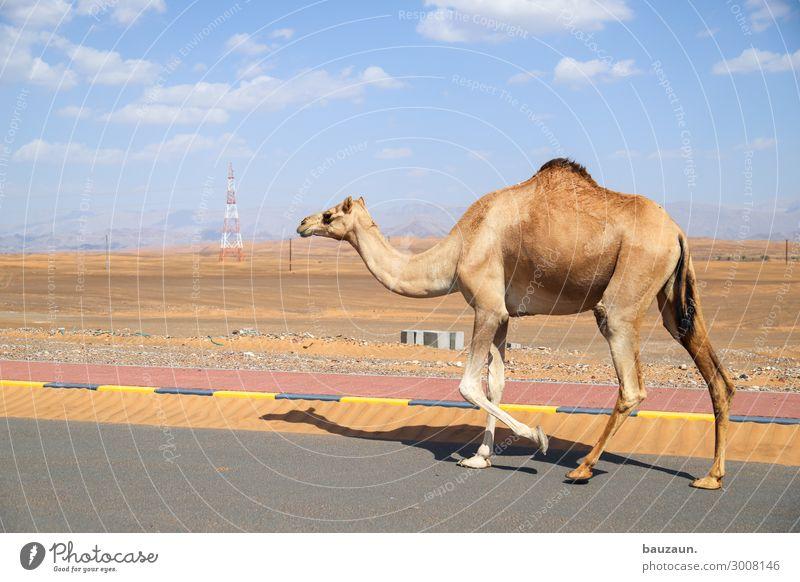 auf in die neue woche. Himmel Ferien & Urlaub & Reisen Natur Sommer Tier Straße Umwelt Sand gehen Verkehr laufen Schönes Wetter beobachten Klima