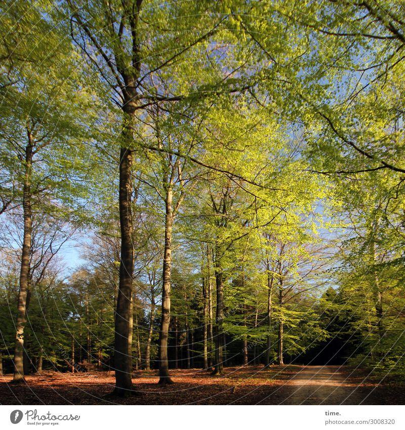Community Umwelt Natur Landschaft Frühling Schönes Wetter Baum Wald Lebensfreude Frühlingsgefühle Verschwiegenheit Zusammensein Gelassenheit ruhig Duft erleben
