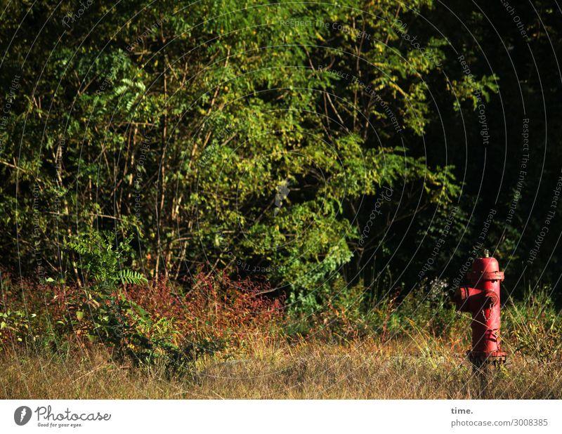Aufpasser Natur Pflanze grün Landschaft rot Baum Einsamkeit Wald Wege & Pfade authentisch Schönes Wetter einzigartig entdecken Hoffnung planen Schutz