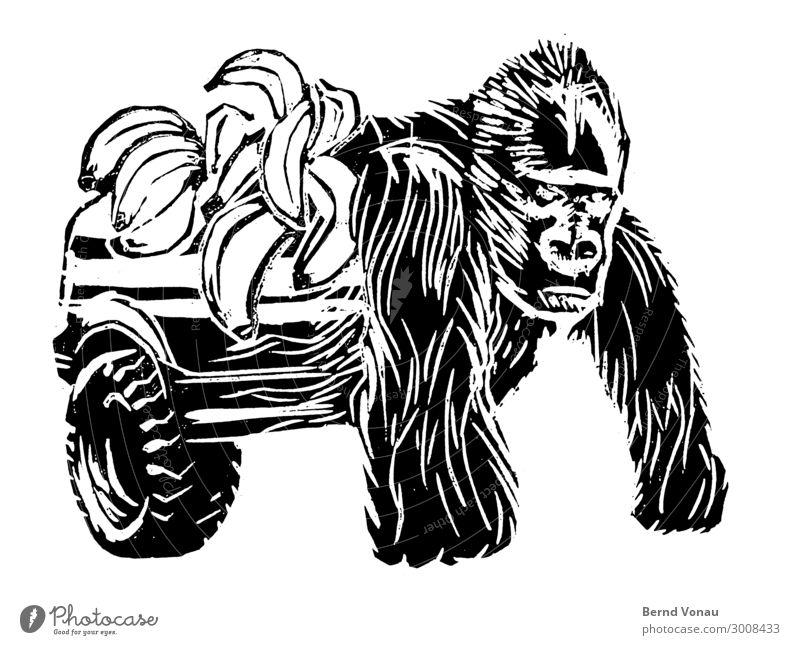 monkeybusiness Fahrzeug PKW Tier 1 Blick Güterverkehr & Logistik Pickup Banane Affen Gorilla Holzschnitt Collage Kraft Zwitter transformer silberrücken Frucht
