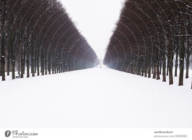 Herrenhäuser Allee im Schnee Ferien & Urlaub & Reisen Natur weiß Landschaft Baum Einsamkeit ruhig Winter Wege & Pfade Deutschland Tourismus Garten Ausflug