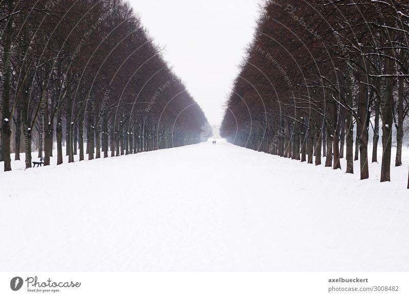 Herrenhäuser Allee im Schnee Freizeit & Hobby Ferien & Urlaub & Reisen Tourismus Ausflug Städtereise Winter Winterurlaub Natur Landschaft Eis Frost Baum Garten