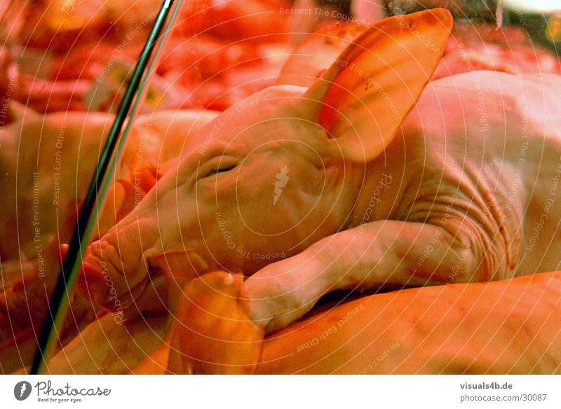 Grillferkel Fleisch Wurstwaren Ernährung kaufen Küche Feste & Feiern Auge Ohr Nase Tier Nutztier Totes Tier Tiergesicht 1 Tierjunges lachen schlafen rot Tod
