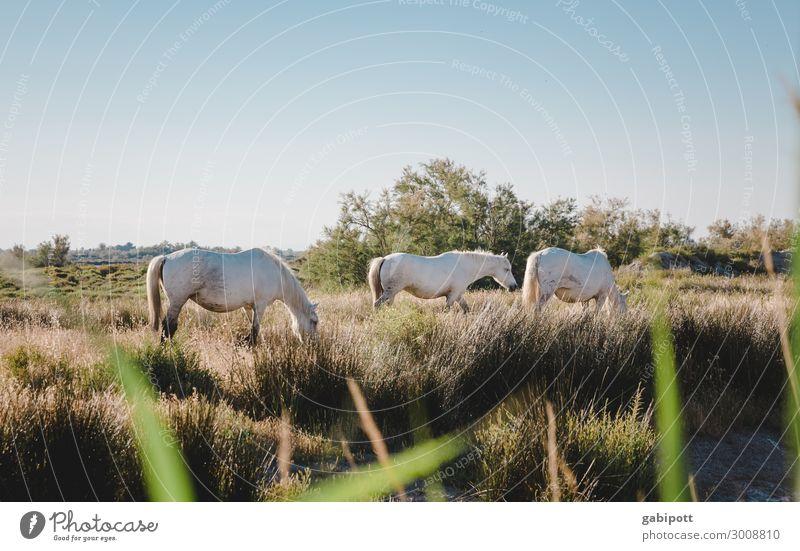 ein Hauch von Freiheit Ferien & Urlaub & Reisen Tourismus Ausflug Abenteuer Ferne Umwelt Natur Landschaft Pflanze Tier Urelemente Erde Luft Wolkenloser Himmel