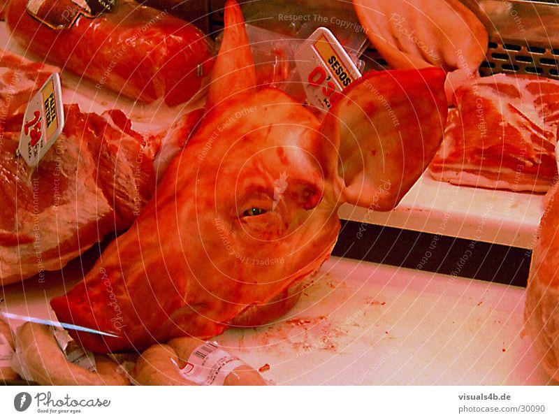 Schweinekopf Mensch rot Auge Tod Feste & Feiern Nase Ernährung Kochen & Garen & Backen Ohr gruselig Ladengeschäft Spanien Fleisch Blut Theke Feiertag