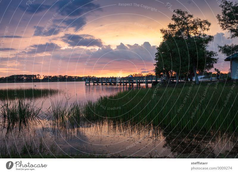 Natur blau schön Landschaft Erholung ruhig gelb orange rosa Park Brücke Abenddämmerung Teich Florida Neapel Independence Day