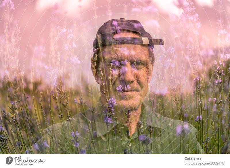 Lavendel maskulin 1 Mensch Landschaft Pflanze Sommer Blume Gras Blatt Blüte Garten Mütze Blühend Duft schön grün violett rosa Stimmung Fröhlichkeit Natur Umwelt