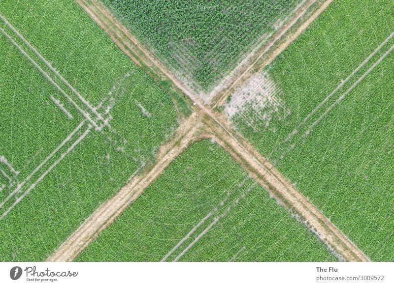Kreuzwege Sommer Landwirtschaft Forstwirtschaft Umwelt Natur Landschaft Pflanze Mais Maisfeld Rübenfeld Feld Menschenleer Wege & Pfade Wegkreuzung Traktor