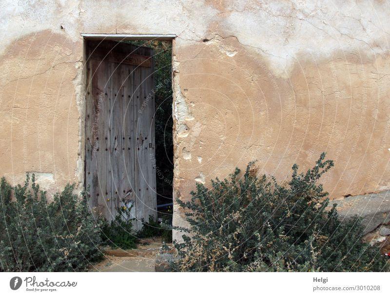 alte Wand eines Gebäudes mit leicht geöffneter Holztür und Pflanzen Schönes Wetter Sträucher Haus Mauer Tür Häusliches Leben authentisch außergewöhnlich einfach