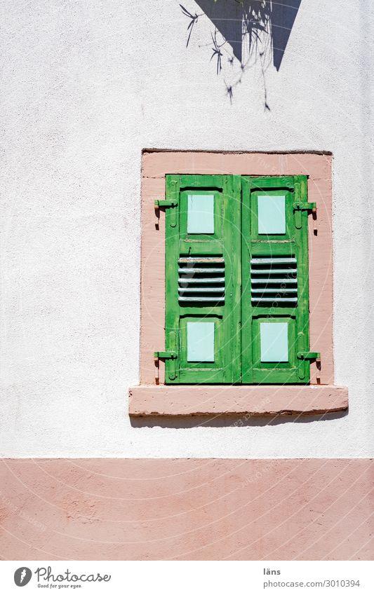 Fassadenbegrünung Altstadt Haus Gebäude Mauer Wand Fenster Fensterladen eckig Pflanze Schutz Wetterschutz Sichtschutz Grenze Privatsphäre Farbfoto Außenaufnahme