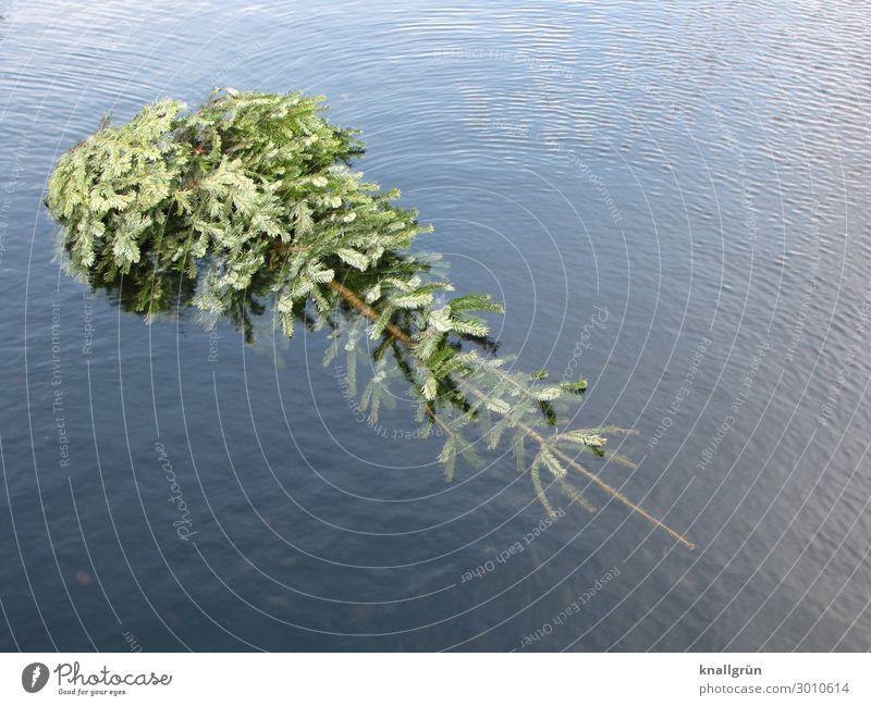 Oh du fröhliche! Umwelt Natur Pflanze Wasser Winter Baum Tanne See Weihnachtsbaum liegen Schwimmen & Baden nass Stadt blau grün Gefühle verschwenden Ende