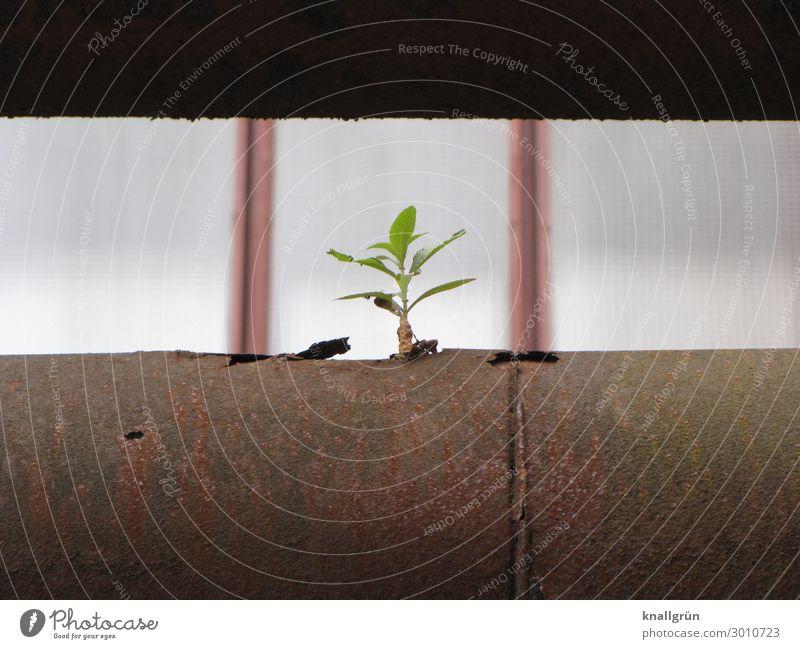 Lebenskraft Pflanze Baum Sprössling Röhren Rohrleitung Industriebau Wachstum klein Stadt braun grün Gefühle Natur Überleben Umwelt Farbfoto Außenaufnahme