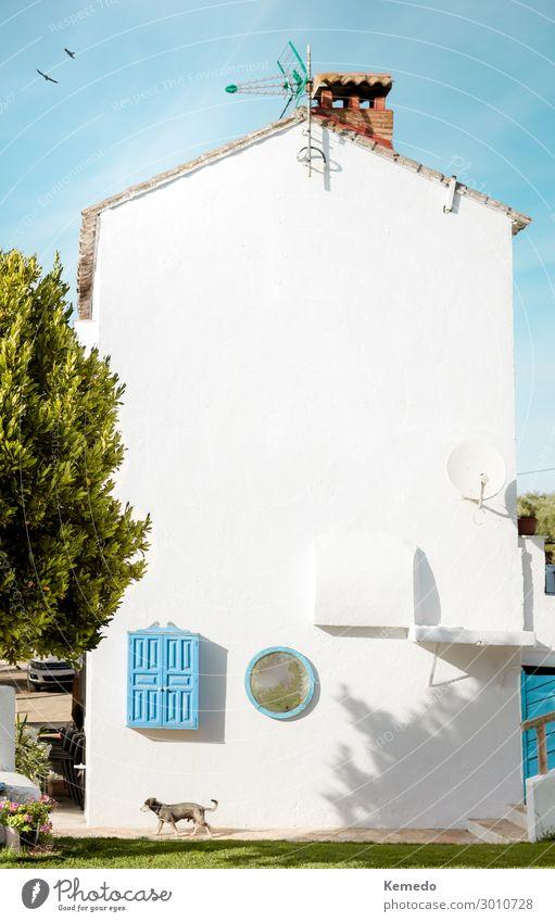 Himmel Ferien & Urlaub & Reisen Natur Hund alt Sommer Pflanze blau Stadt schön weiß Landschaft Sonne Baum Blume Haus