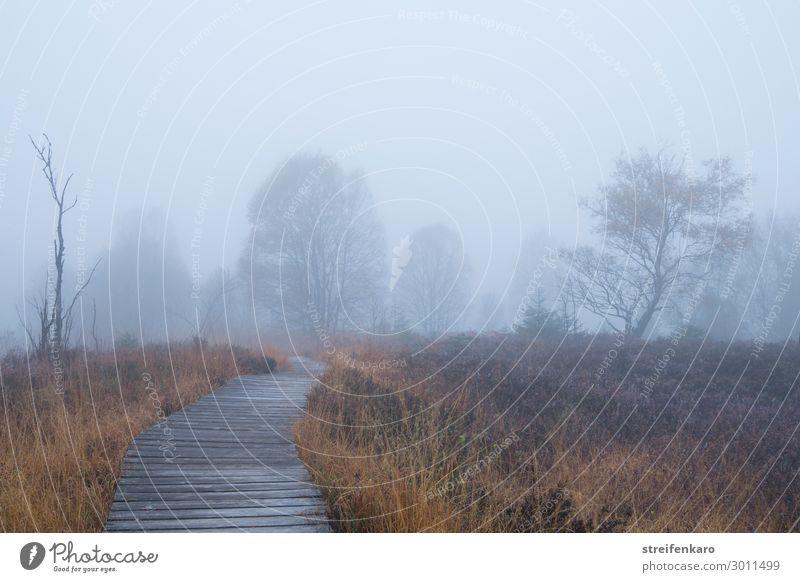 Wegführung | nebulös Ausflug Abenteuer Umwelt Natur Landschaft Pflanze Urelemente Luft Wassertropfen Herbst Nebel Baum Gras Sträucher Moor Sumpf Hohes Venn