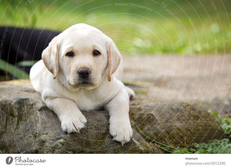 Knuffelwuff Hund Sommer Tier Gesundheit Tierjunges Lifestyle Gefühle Glück liegen Wachstum Fröhlichkeit Lebensfreude authentisch Schönes Wetter Coolness