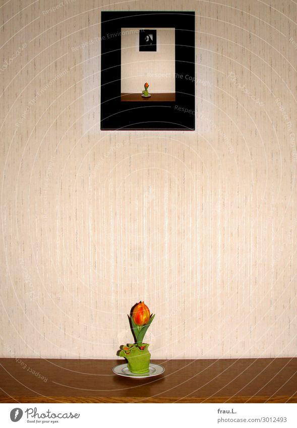 Kleine Tulpe grün rot gelb lustig Gefühle außergewöhnlich ästhetisch geheimnisvoll Kitsch Irritation seltsam Rätsel Montage sentimental Ironie