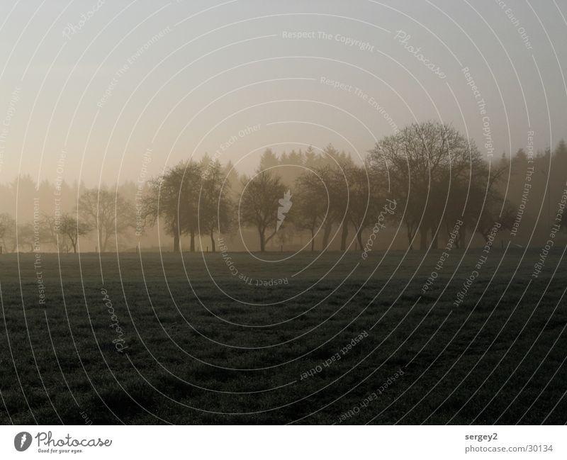 früh morgens 2 Baum grau Feld Nebel Landwirtschaft Tau mystisch